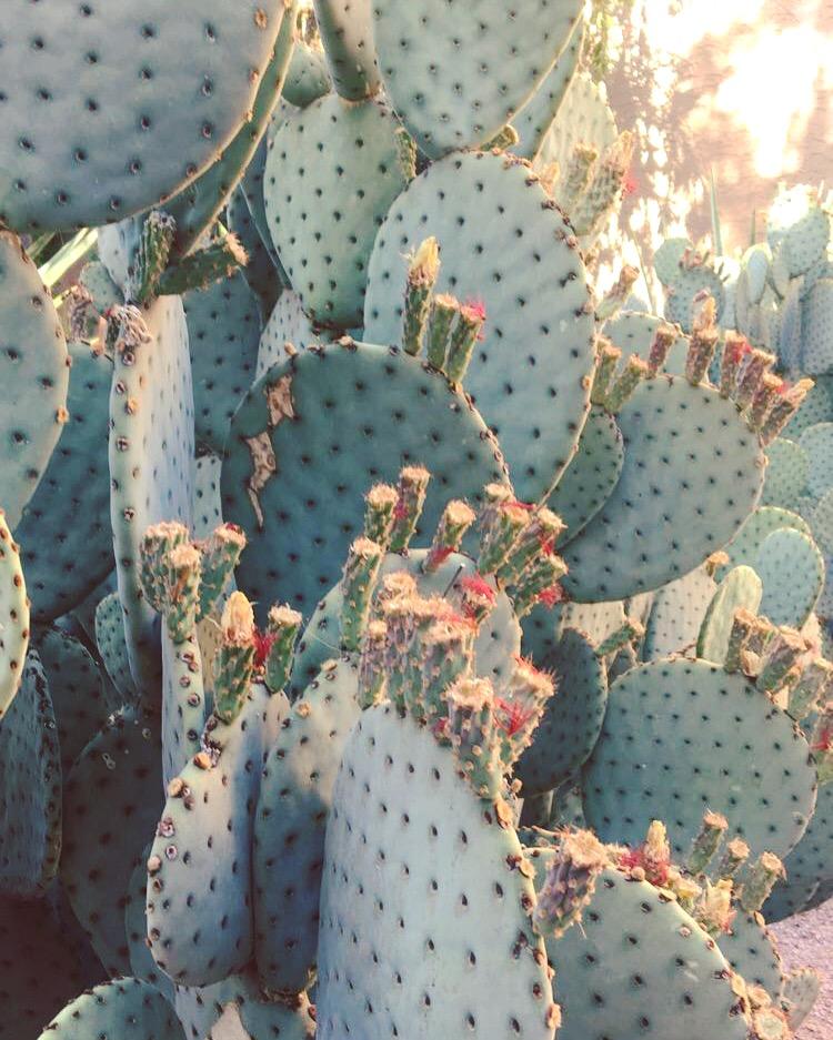 Arizona Desert Vibes