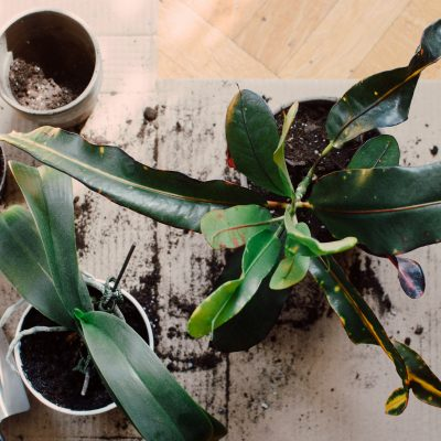 How To Repot Your Houseplants