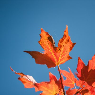 The Science Behind Why People Love Fall